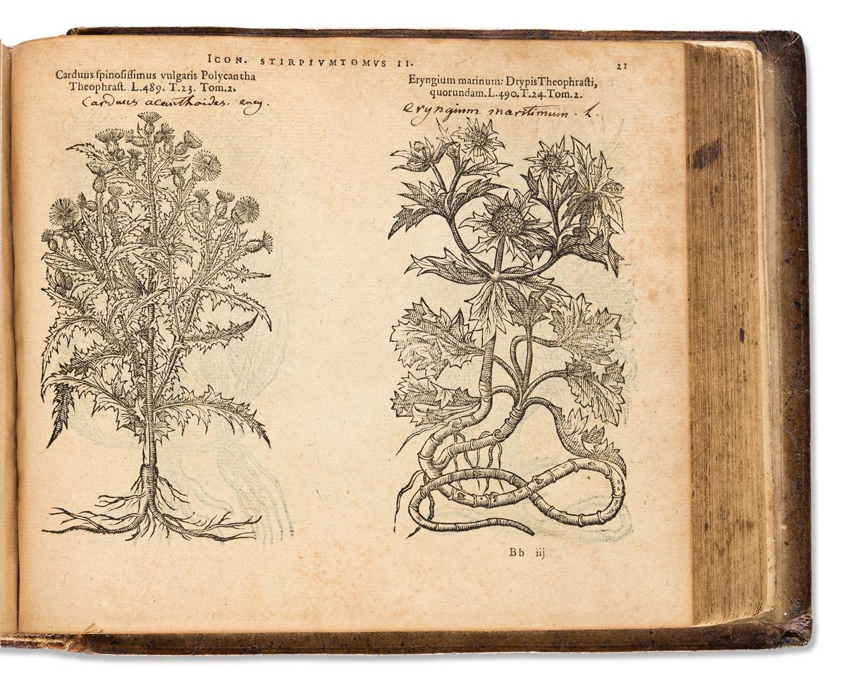 LObel, Matthias de (1538-1616) Plantarum seu Stirpium Icones.