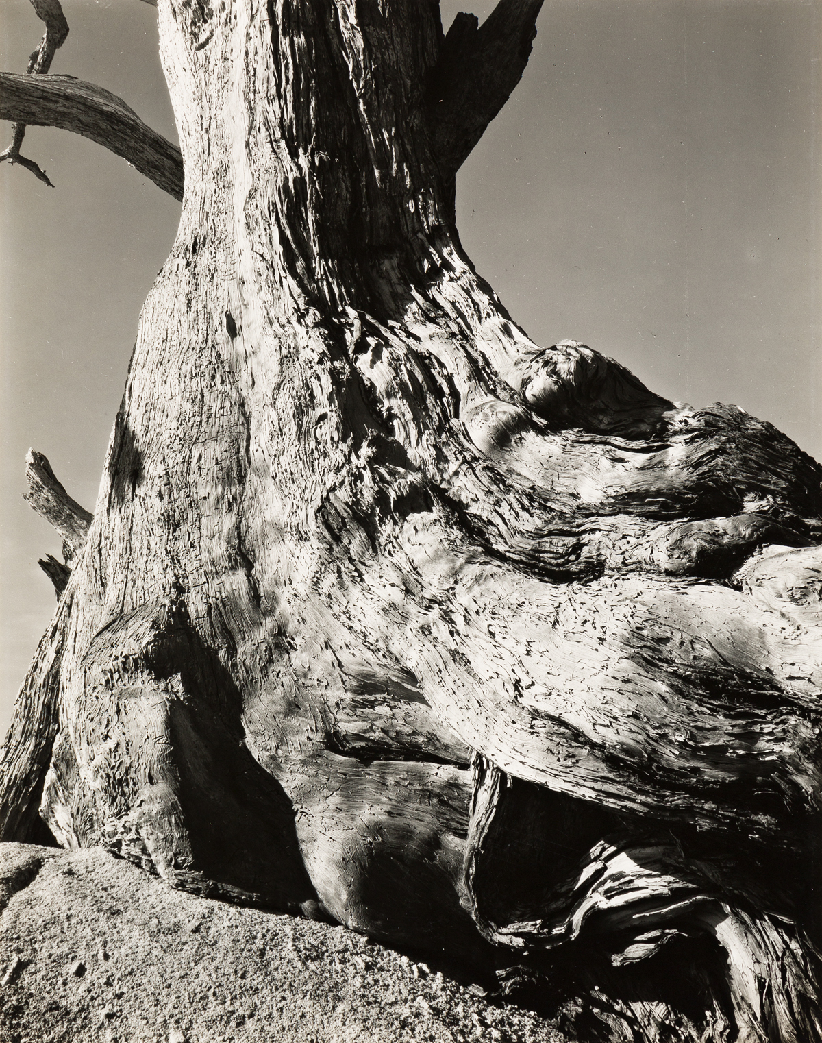 EDWARD-WESTON-(1886-1958)-Cypress-Pebble-Beach