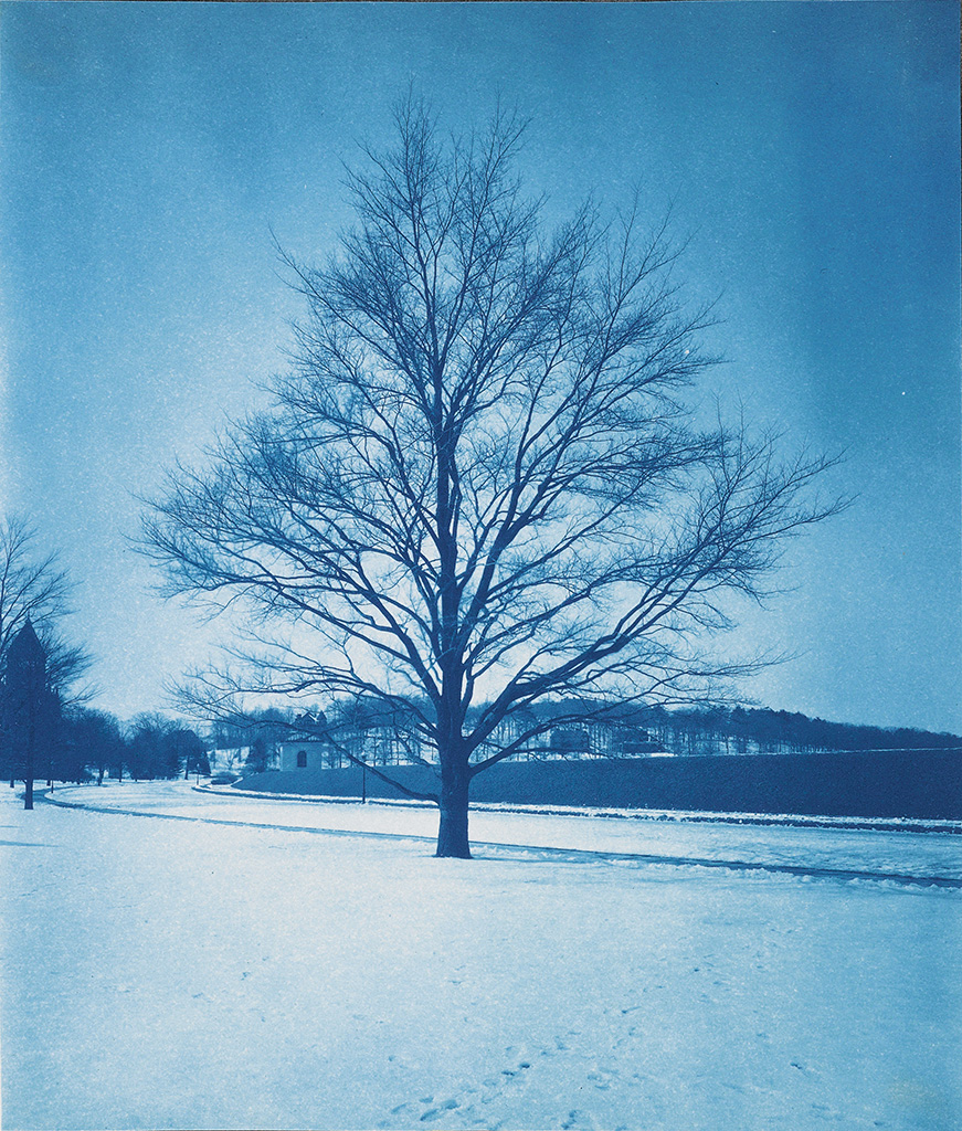 (BOSTON) Album with 63 cyanotypes depicting gardens, parks, and the harbor in greater Boston,