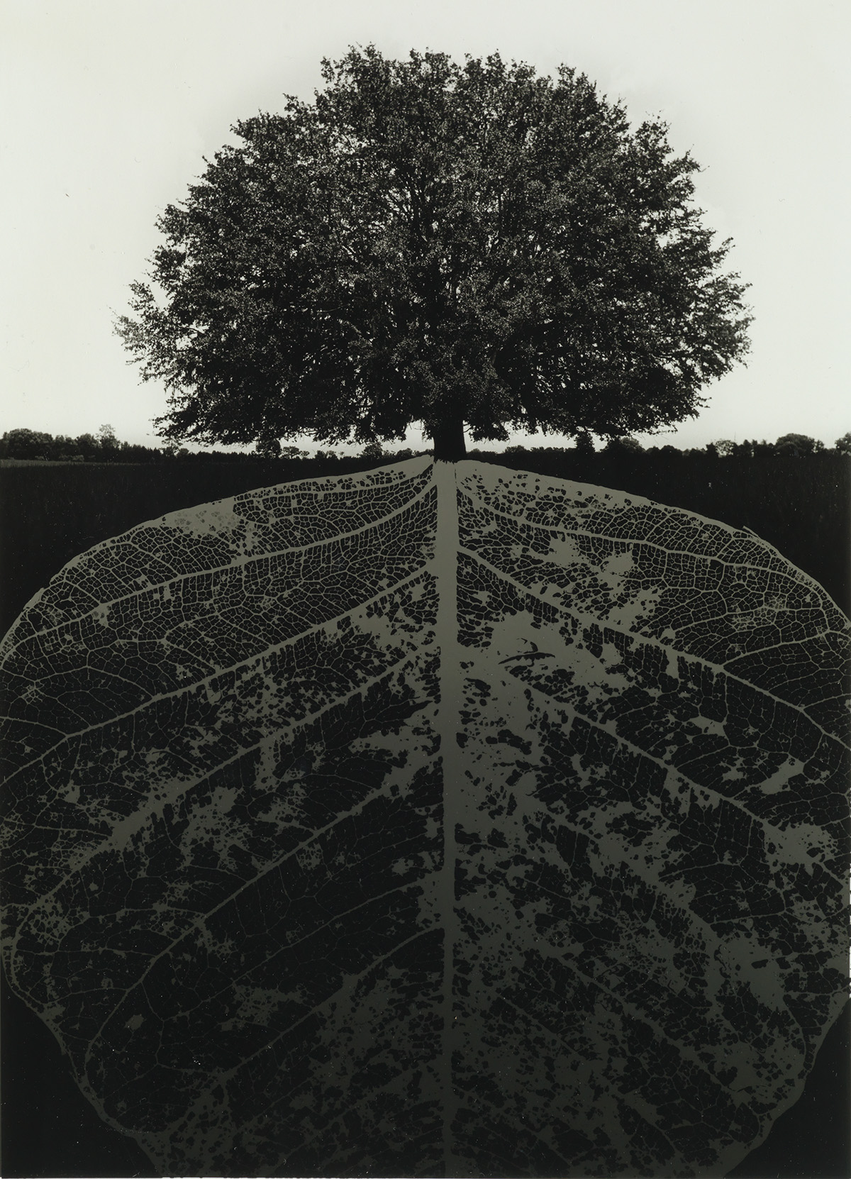 JERRY-UELSMANN-(1934--)-Untitled-(tree-and-mirrored-leaf)