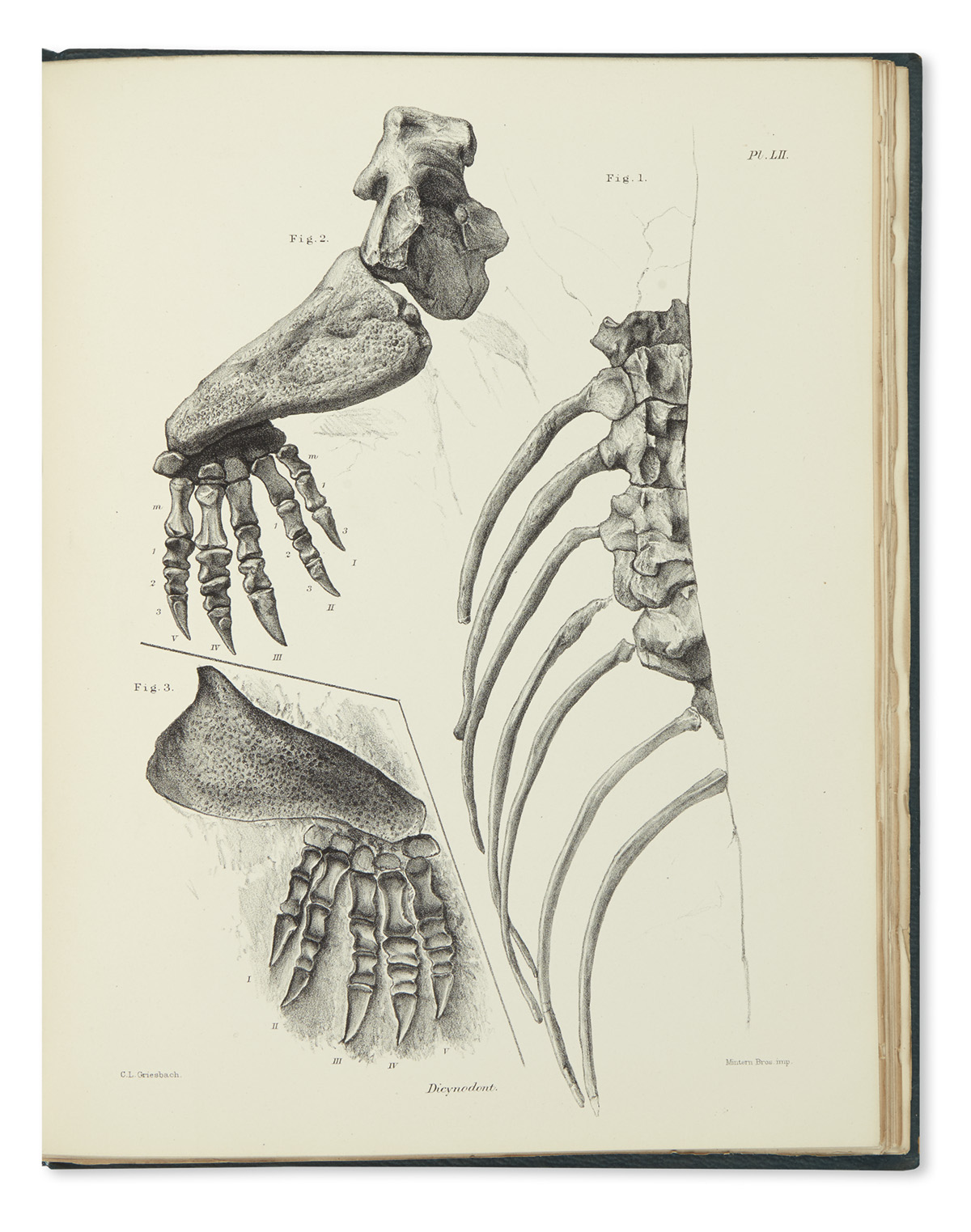 (FOSSILS)-Owen-Sir-Richard-Descriptive-and-Illustrated-Catal
