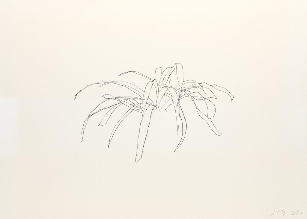 ELLSWORTH-KELLY-Leaves