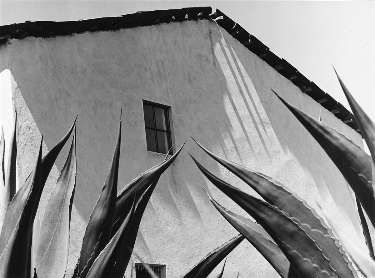 MANUEL ÁLVAREZ BRAVO (1902-2002) Ventana a los magueyes [Window on the agaves].