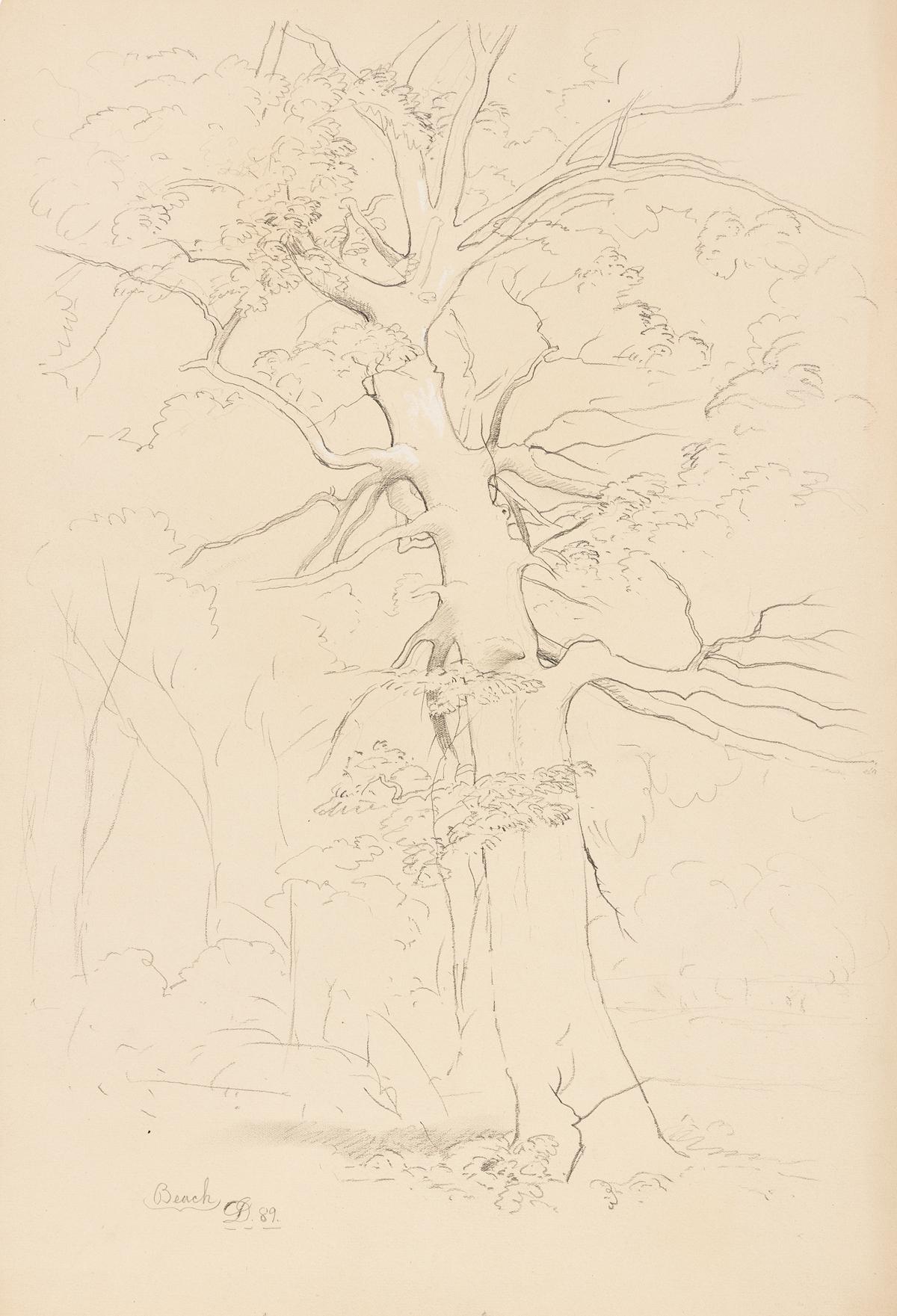 DAVID JOHNSON Two pencil landscape drawings.