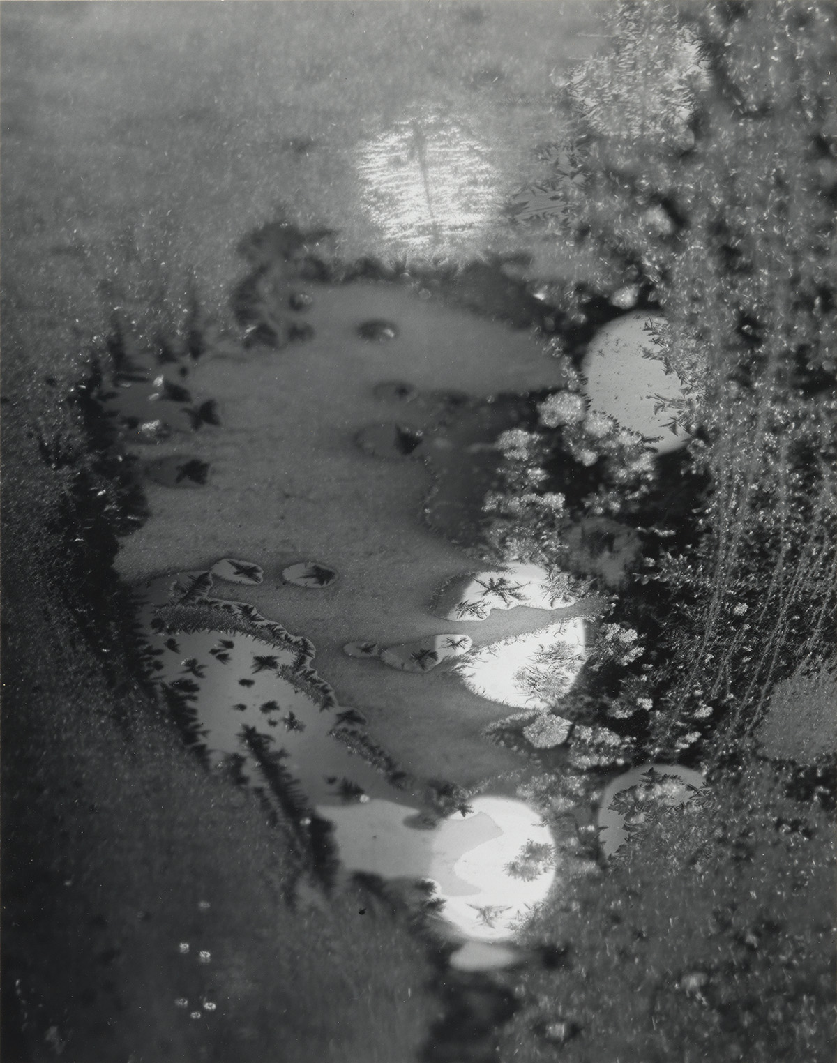 MINOR-WHITE-(1908-1976)-Beginnings-Rochester-New-York-(frost