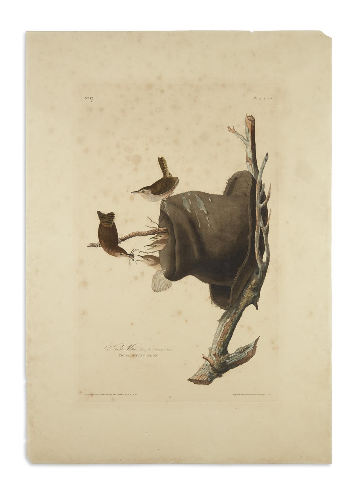 AUDUBON-JOHN-JAMES-House-Wren-Plate-83