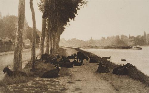 STIEGLITZ-ALFRED-(1864-1946)-A-Decorative-Panel-[Goats-Along