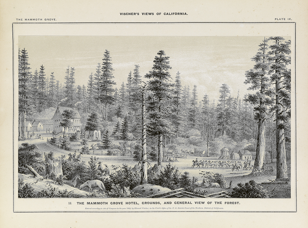 (CALIFORNIA.) Vischer, Edward. Vischers Views of California: The Mammoth Tree Grove, Calaveras County.