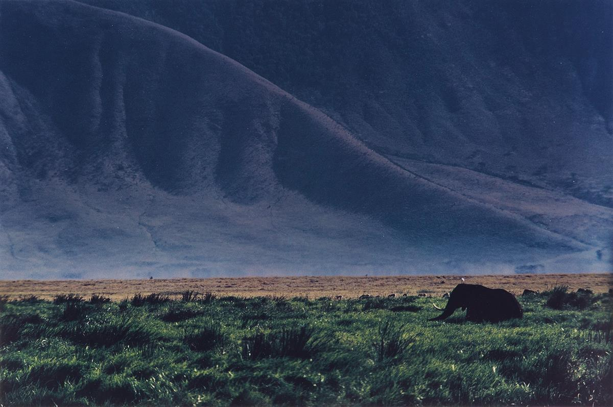 ERNST-HAAS-(1921-1986)-Elephant-in-the-wild