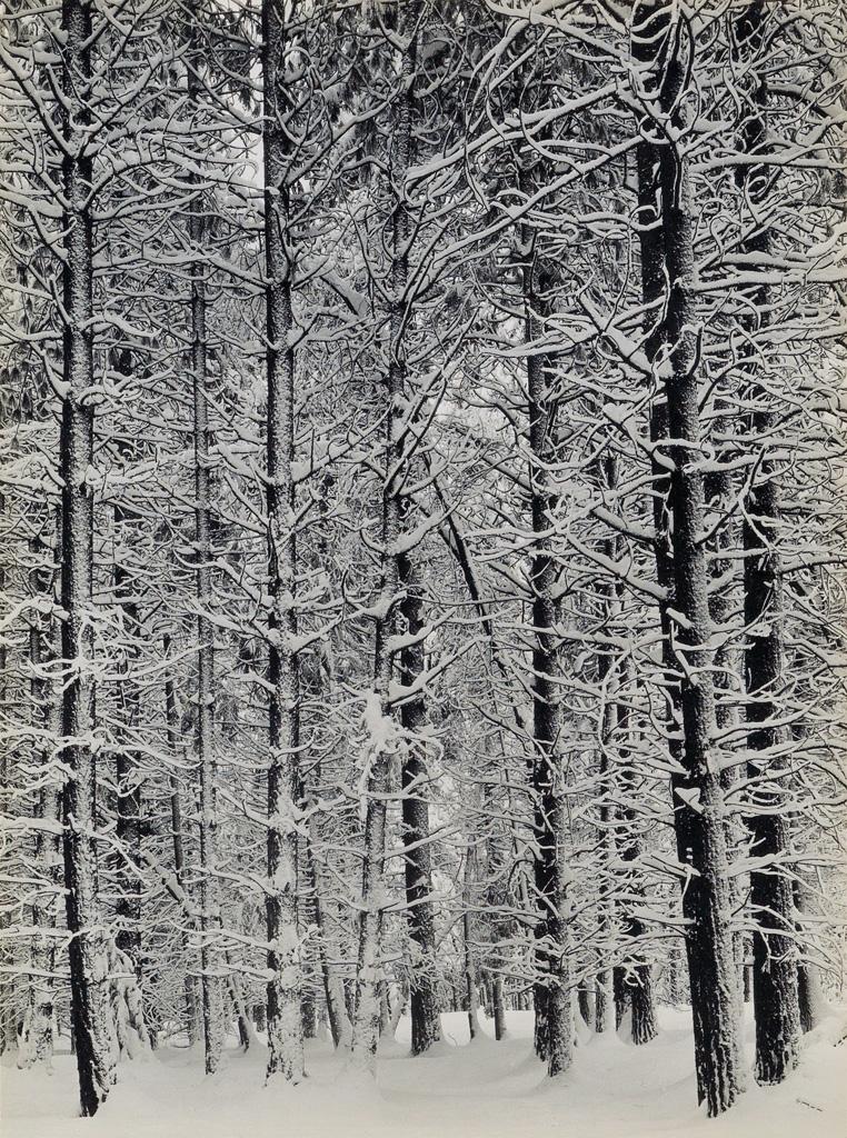 ANSEL ADAMS (1902-1984) Winter in Yosemite [Pine Forest in Snow].