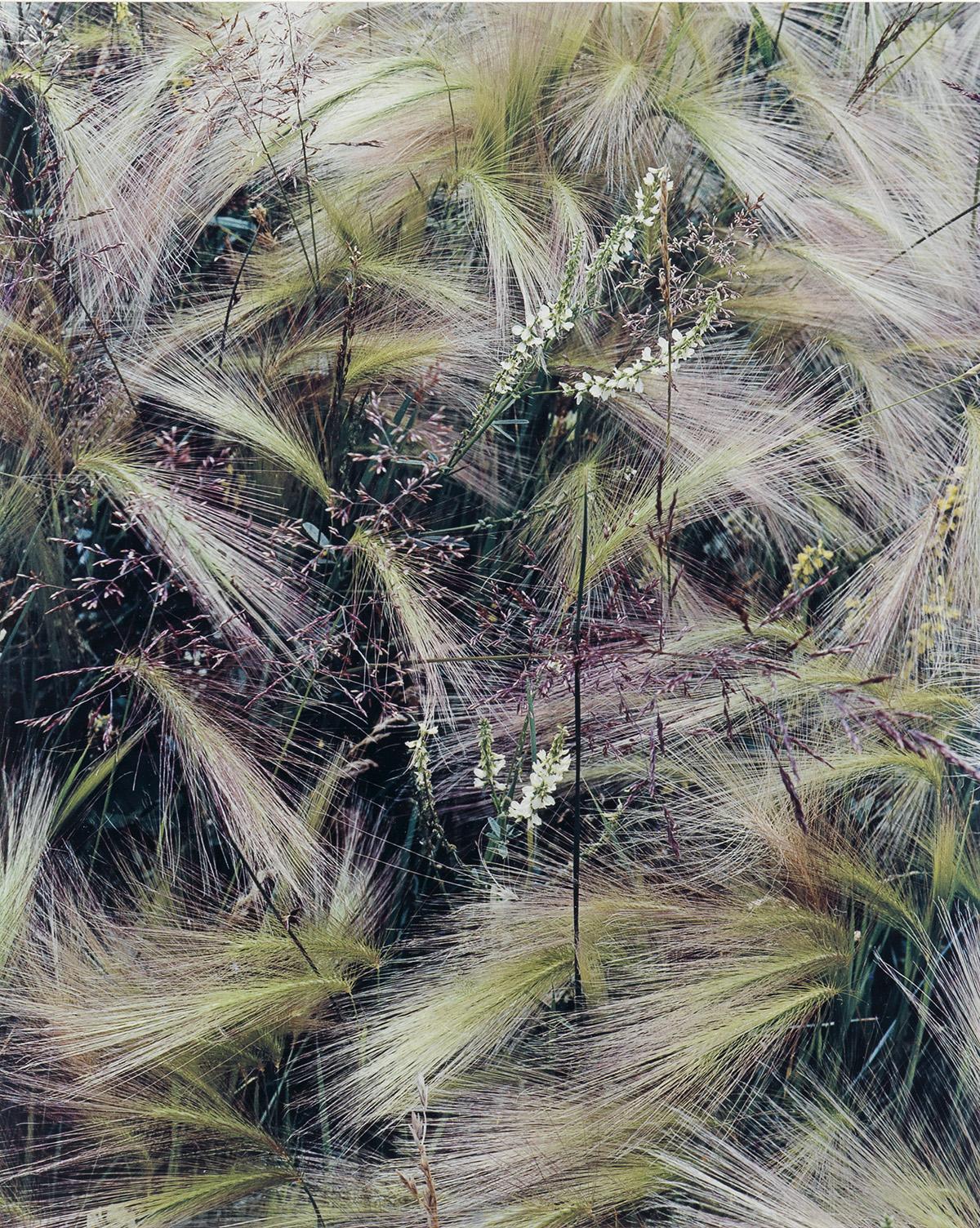 ELIOT PORTER (1901-1990) Portfolio entitled Intimate Landscapes.