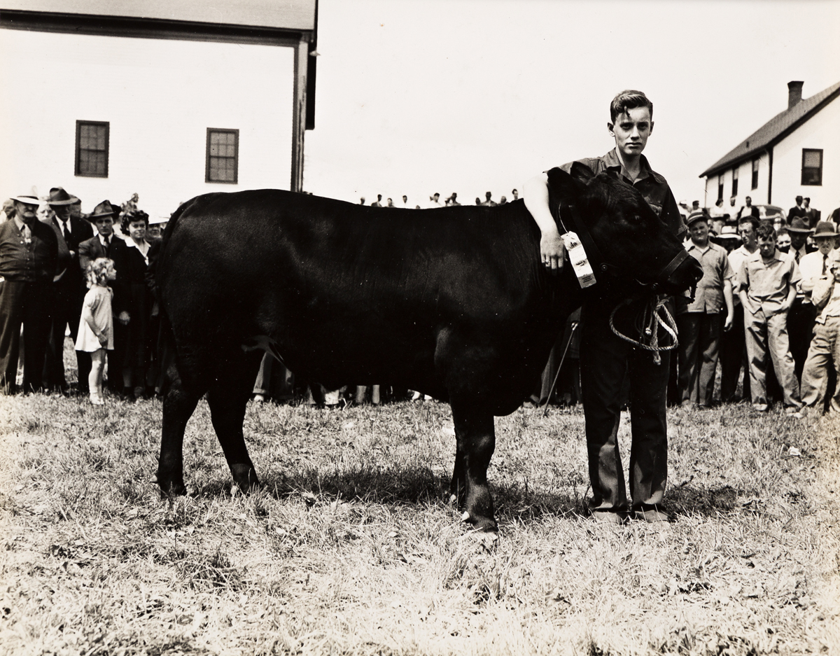 JOHN COLLIER, JR. (1913-1992) A suite of 5 photographs, including two of young men with prize cows (Presque Isle, ME), and three of fig