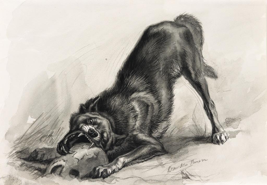 ERNEST SETON THOMPSON. Wolf.