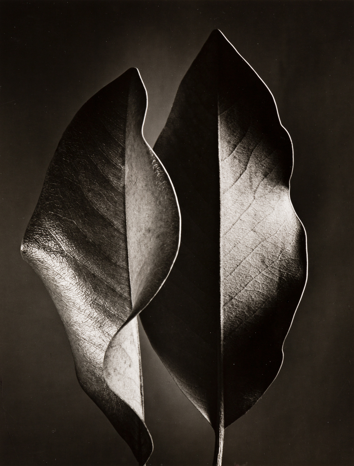 RUTH BERNHARD (1905-2006) The Gift of the Commonplace, a portfolio of 10 photographs dedicated to the memory of Edward Weston.