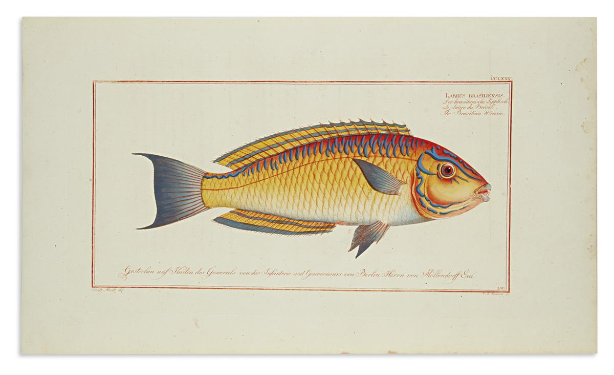 (FISH)-Bloch-Marcus-Elieser-Group-of-4-hand-colored-engraved