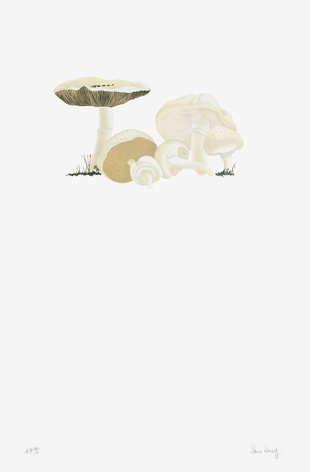 CAGE, JOHN; LONG, LOIS, and SMITH, ALEXANDER. The Mushroom Book.