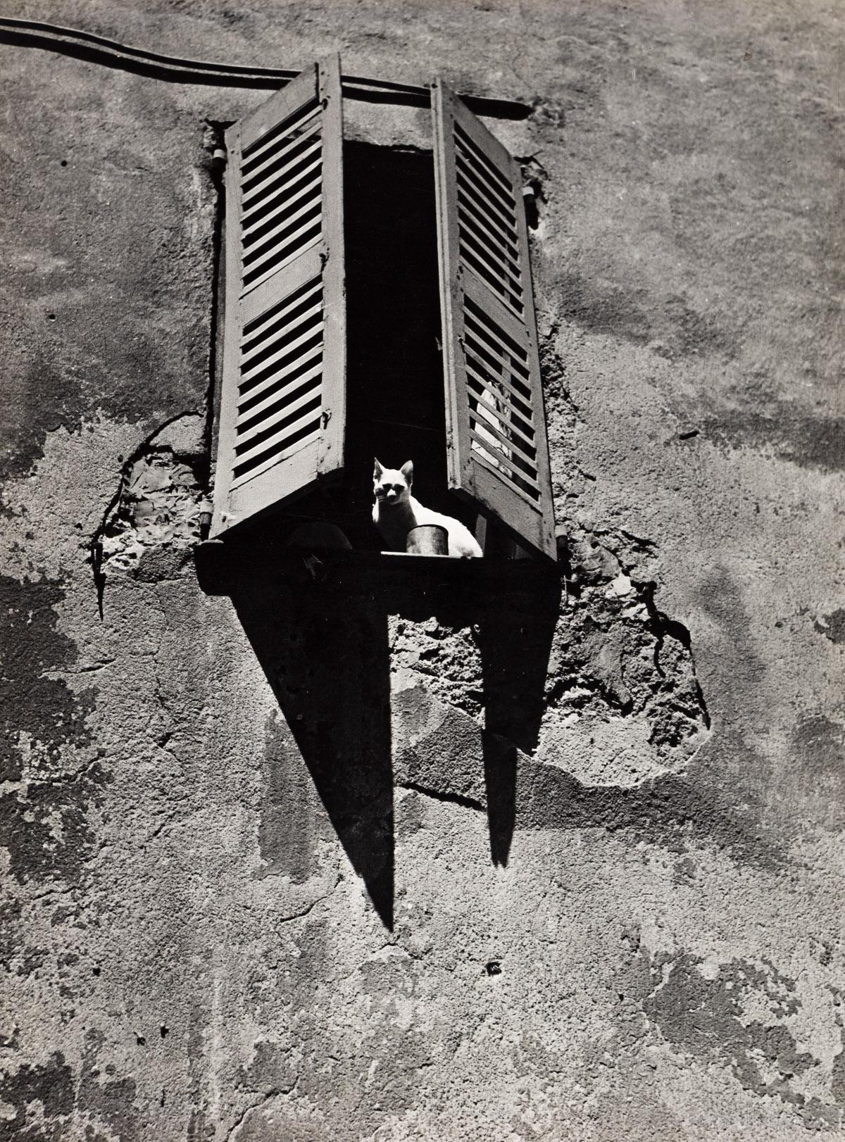 BRASSAÏ (1899-1984) Le Chat de Grasse.