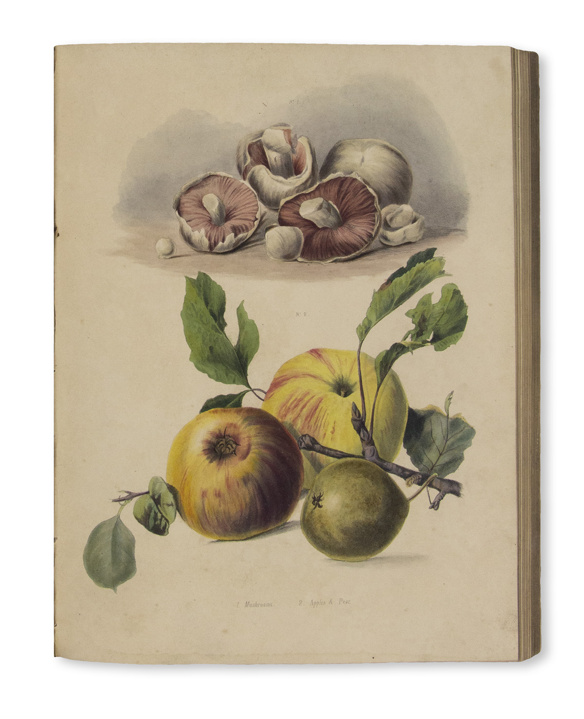 GROVE-HARRIET-The-Calendar-of-Nature-or-The-Seasons-of-Engla