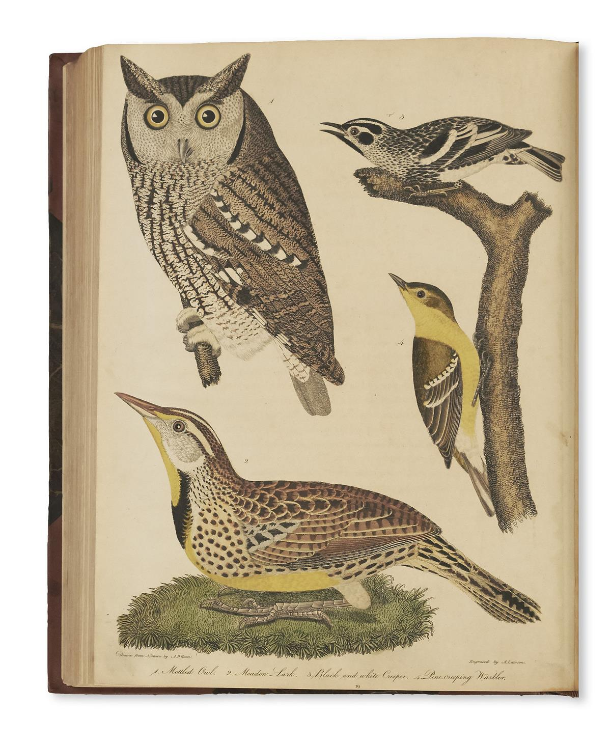 WILSON-ALEXANDER-American-Ornithology;-or-the-Natural-Histor