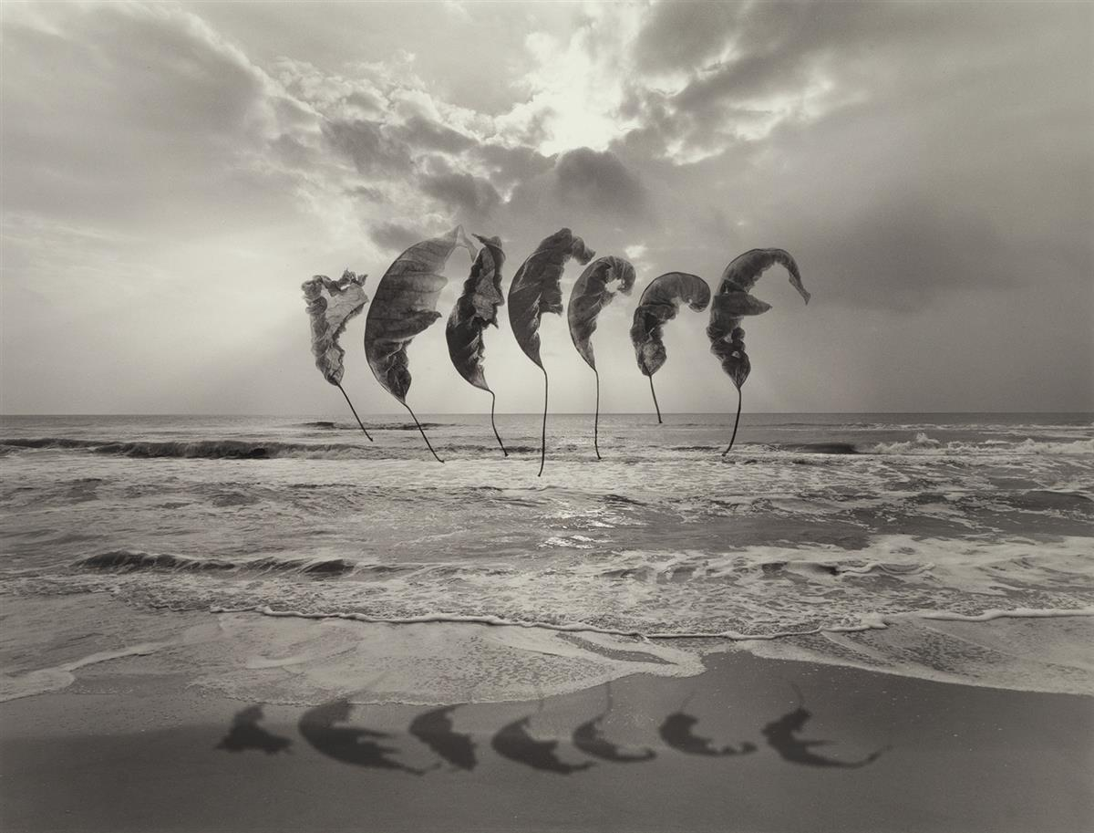 JERRY-UELSMANN-(1934--)-Untitled-(leaves-floating-over-ocean