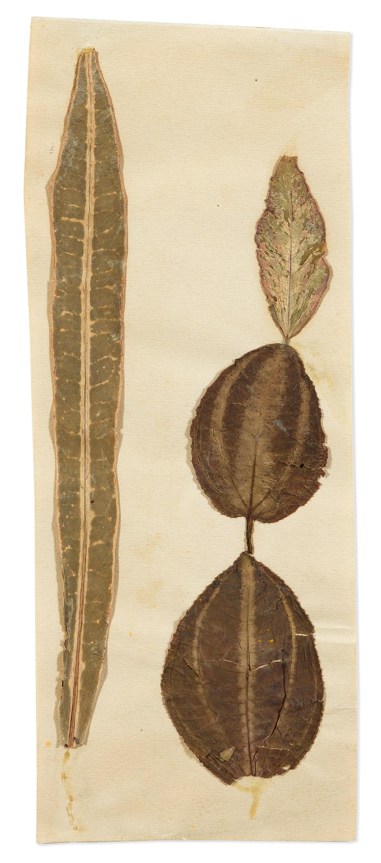 JOSEPH STELLA (1877-1946) Four Leaves.