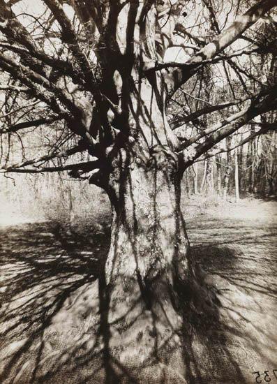 EUGÈNE-ATGET-(1857-1927)BERENICE-ABBOTT-(1898-1991)-Hêtre-(b