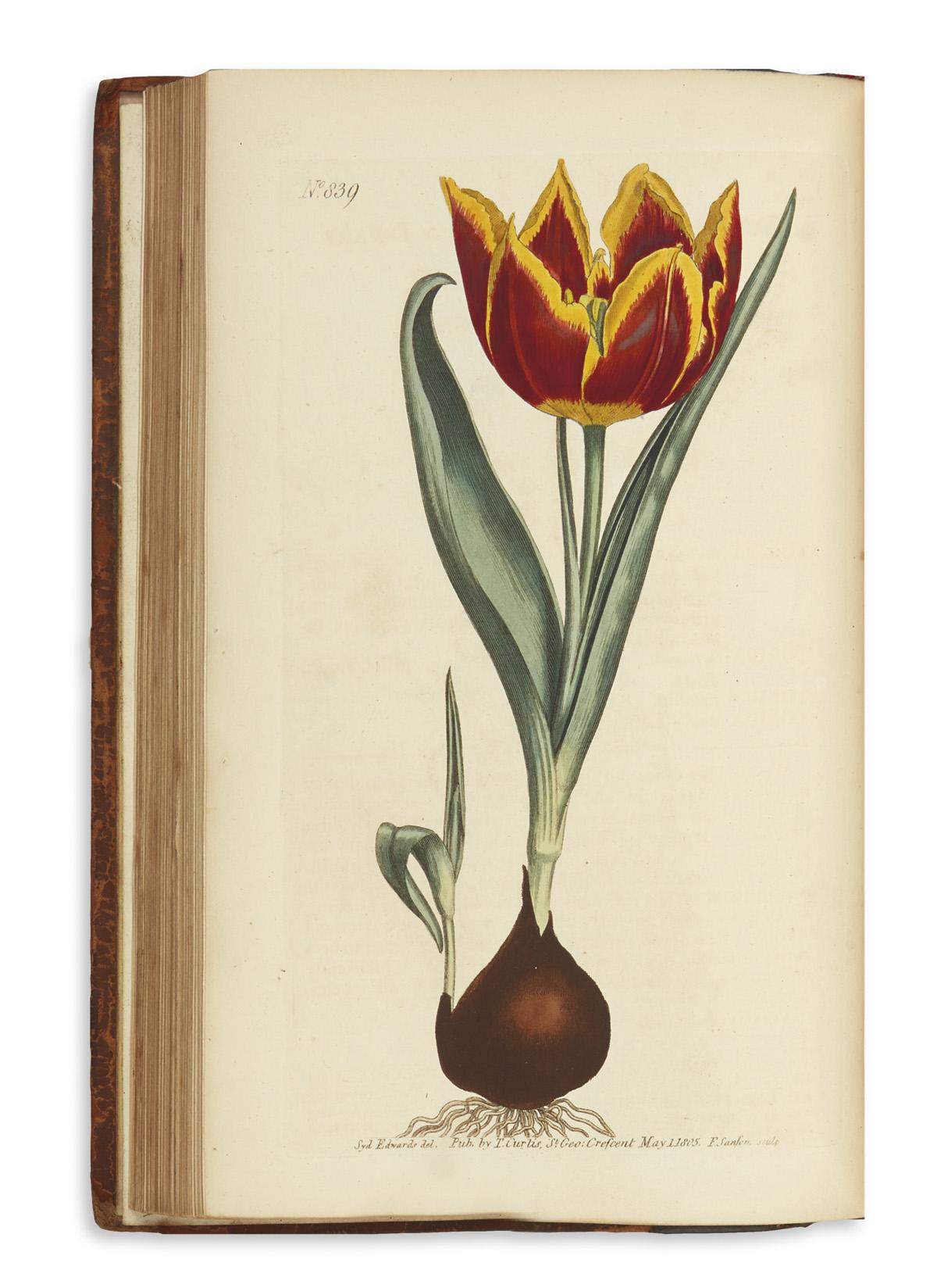 CURTIS-WILLIAM-The-Botanical-Magazine;-or-Flower-Garden-Disp
