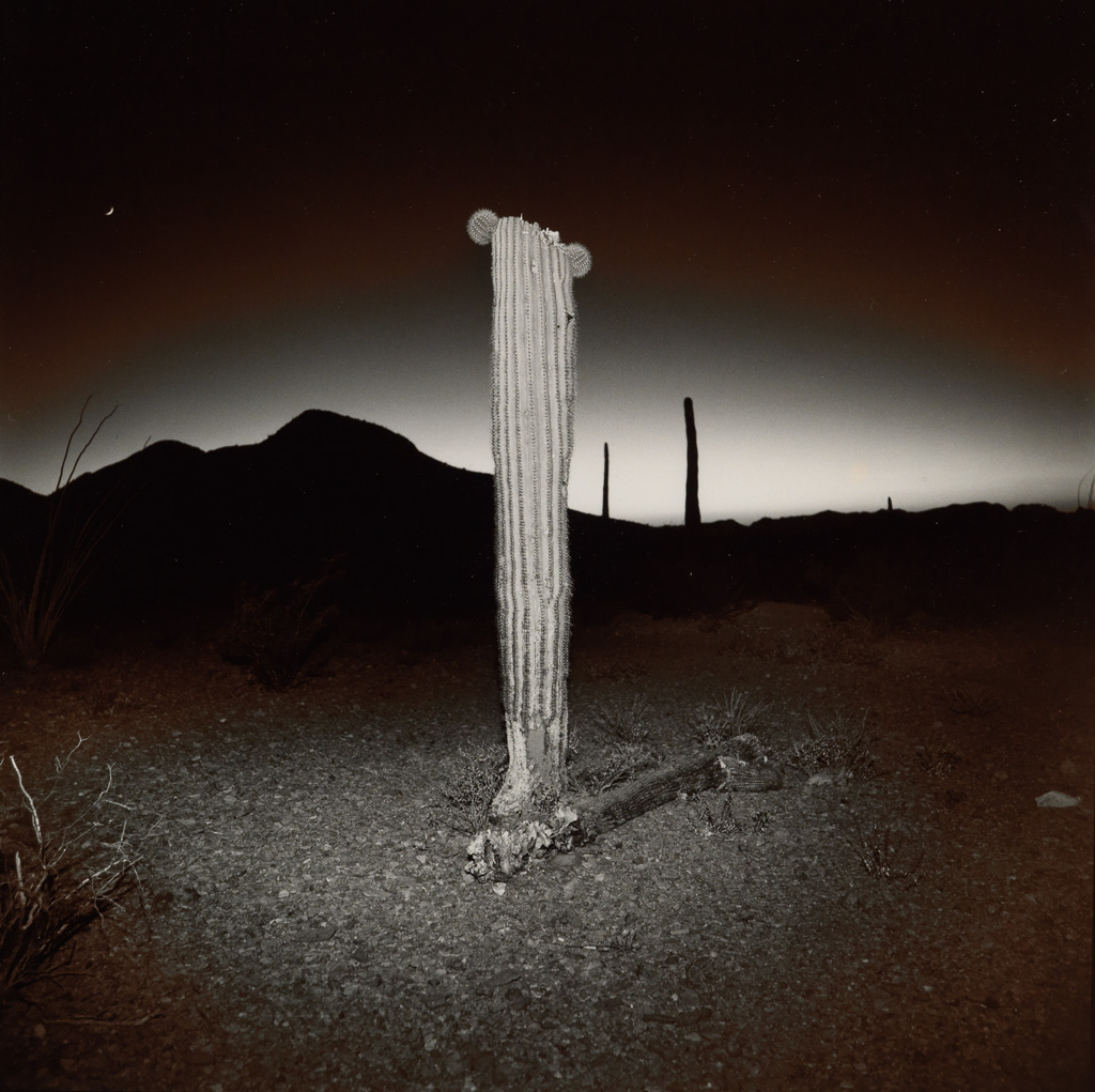RICHARD MISRACH (1949- ) Desert Cactus.