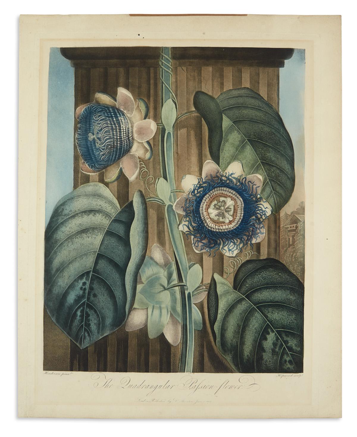 THORNTON-ROBERT-JOHN-The-Quadrangular-Passion-Flower