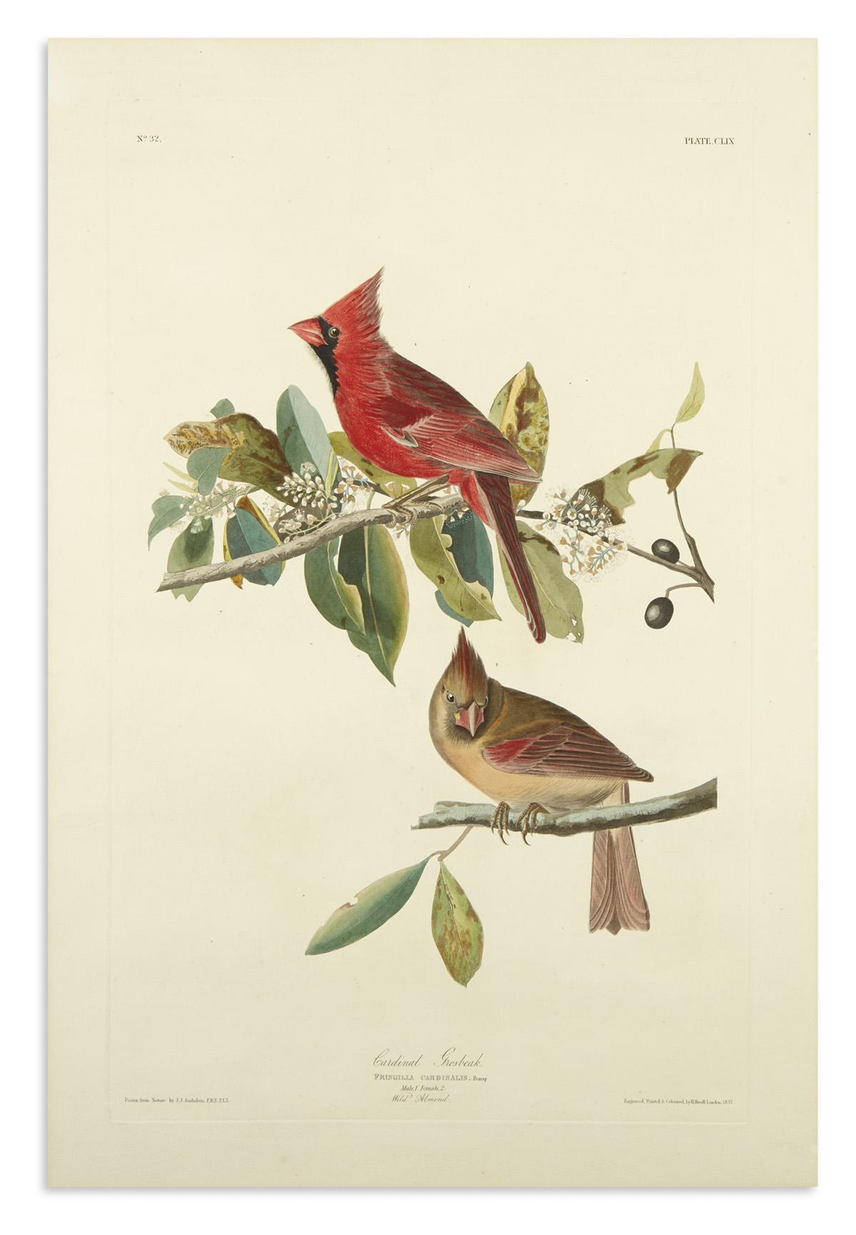 AUDUBON-JOHN-JAMES-Cardinal-Grosbeak-Plate-CLIX
