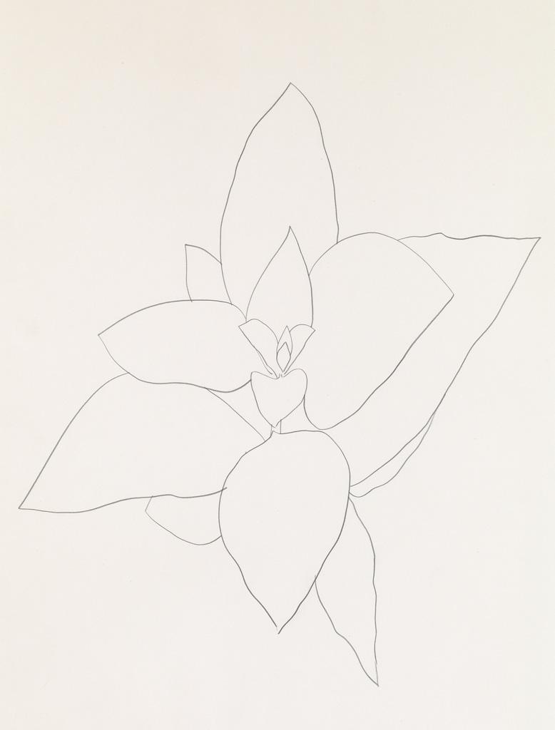 ELLSWORTH KELLY Milkweed.
