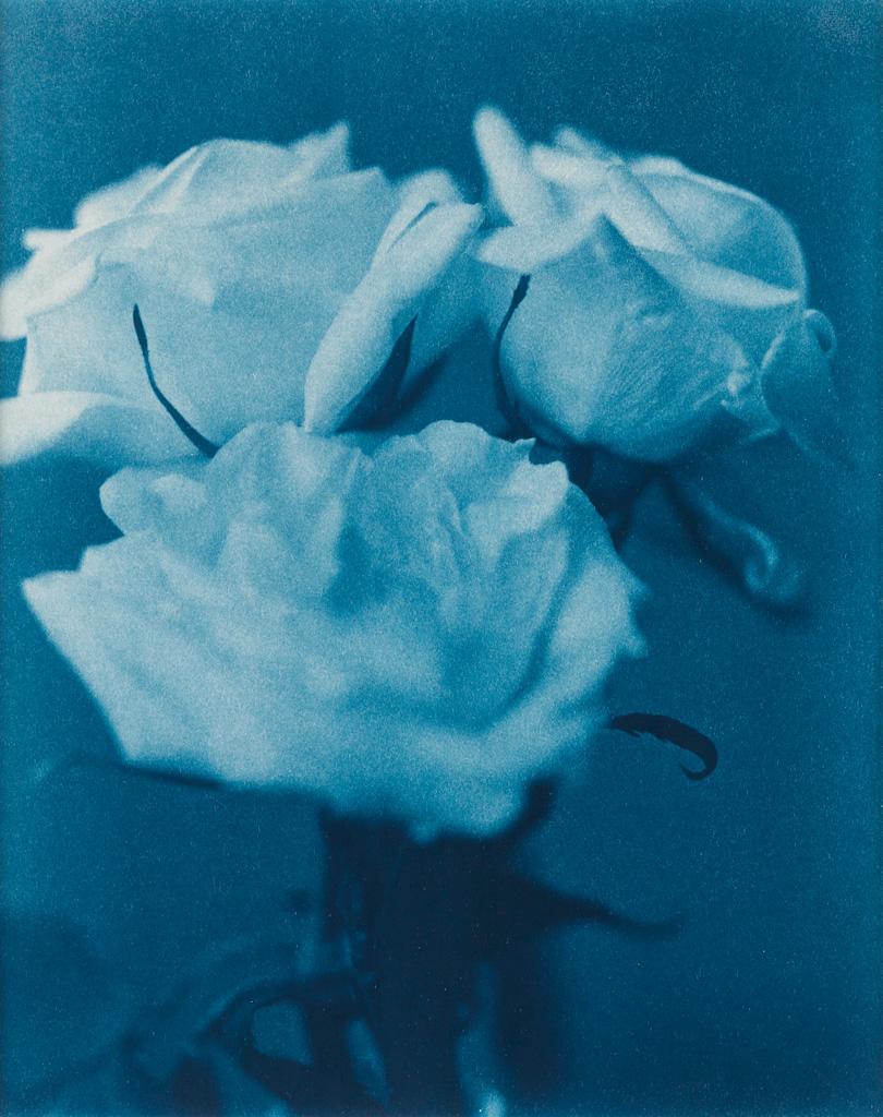 JOHN-DUGDALE-(1960--)-Three-White-Roses