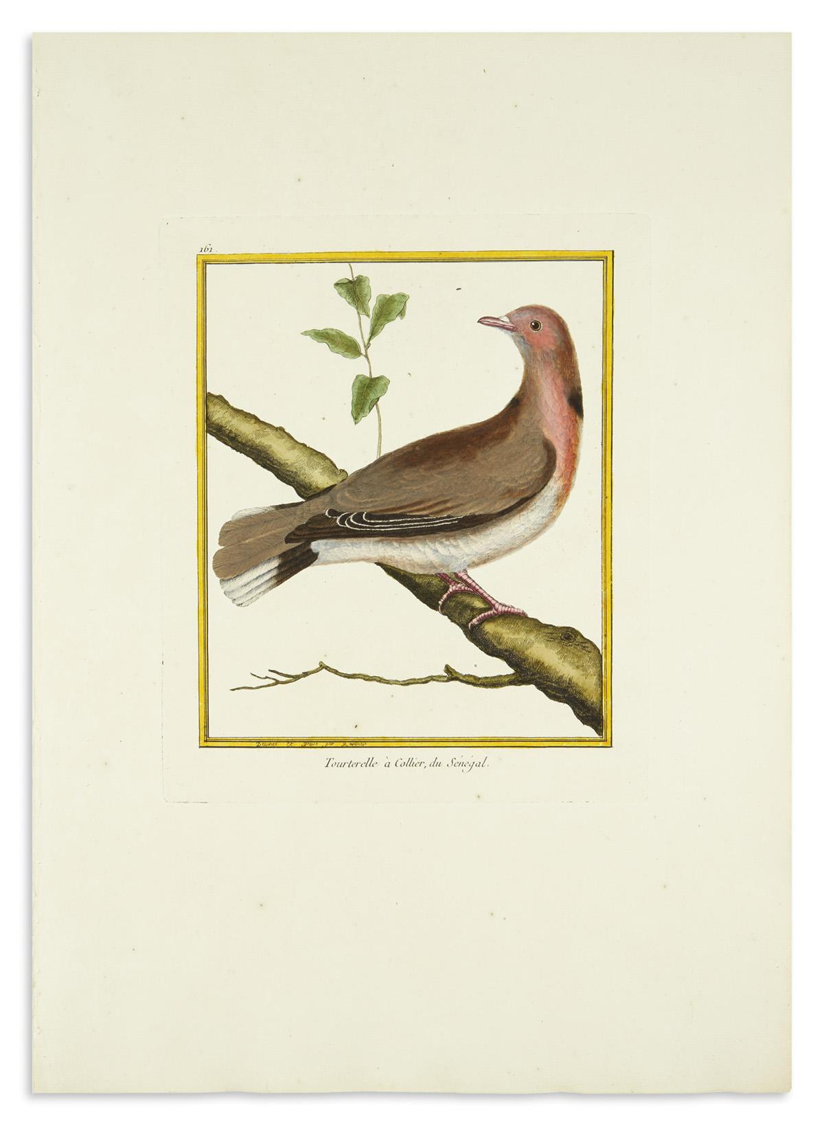 (BIRDS)-Martinet-Francois-Nicolas-(engraver)-Group-of-21-eng