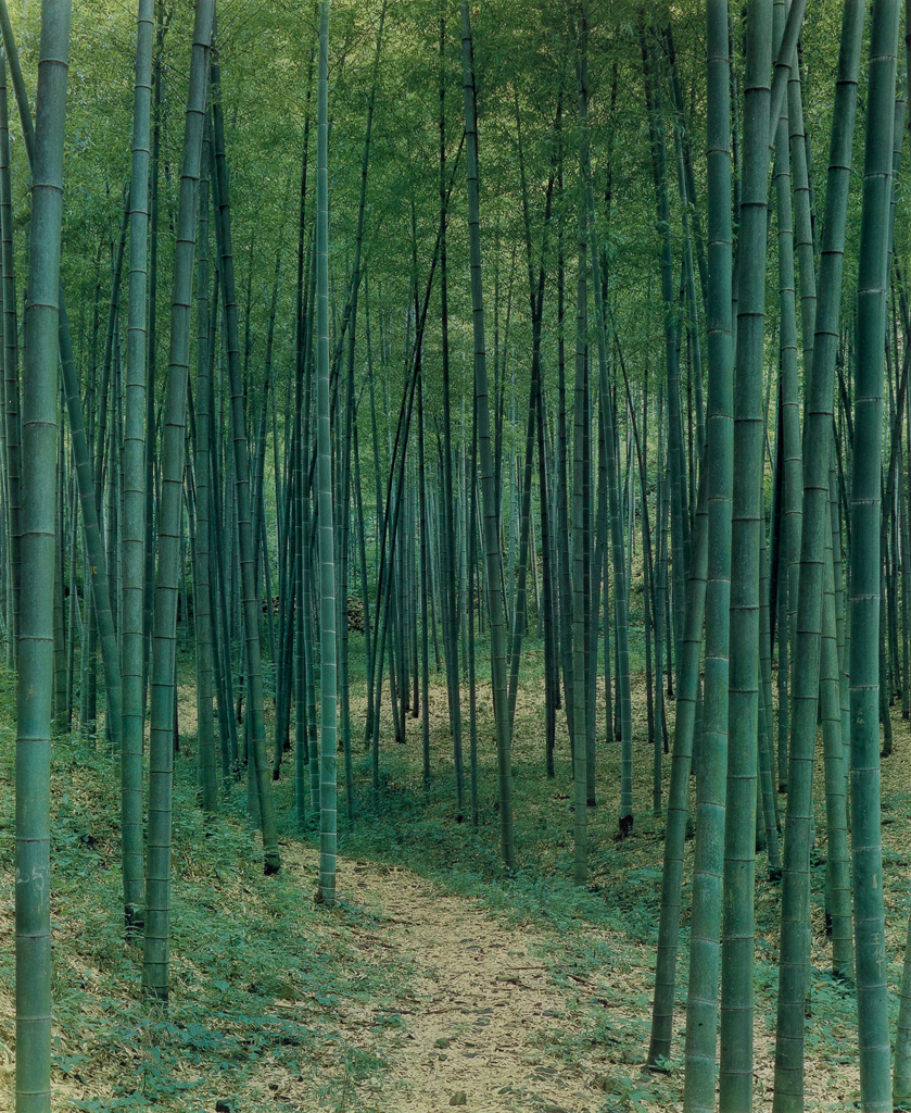 ELIOT-PORTER-(1901-1990)-Bamboo-forest-China
