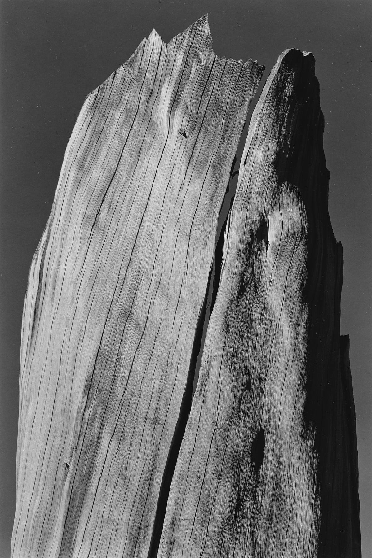 ANSEL-ADAMS-(1902-1984)-Stump-Sierra-Nevada