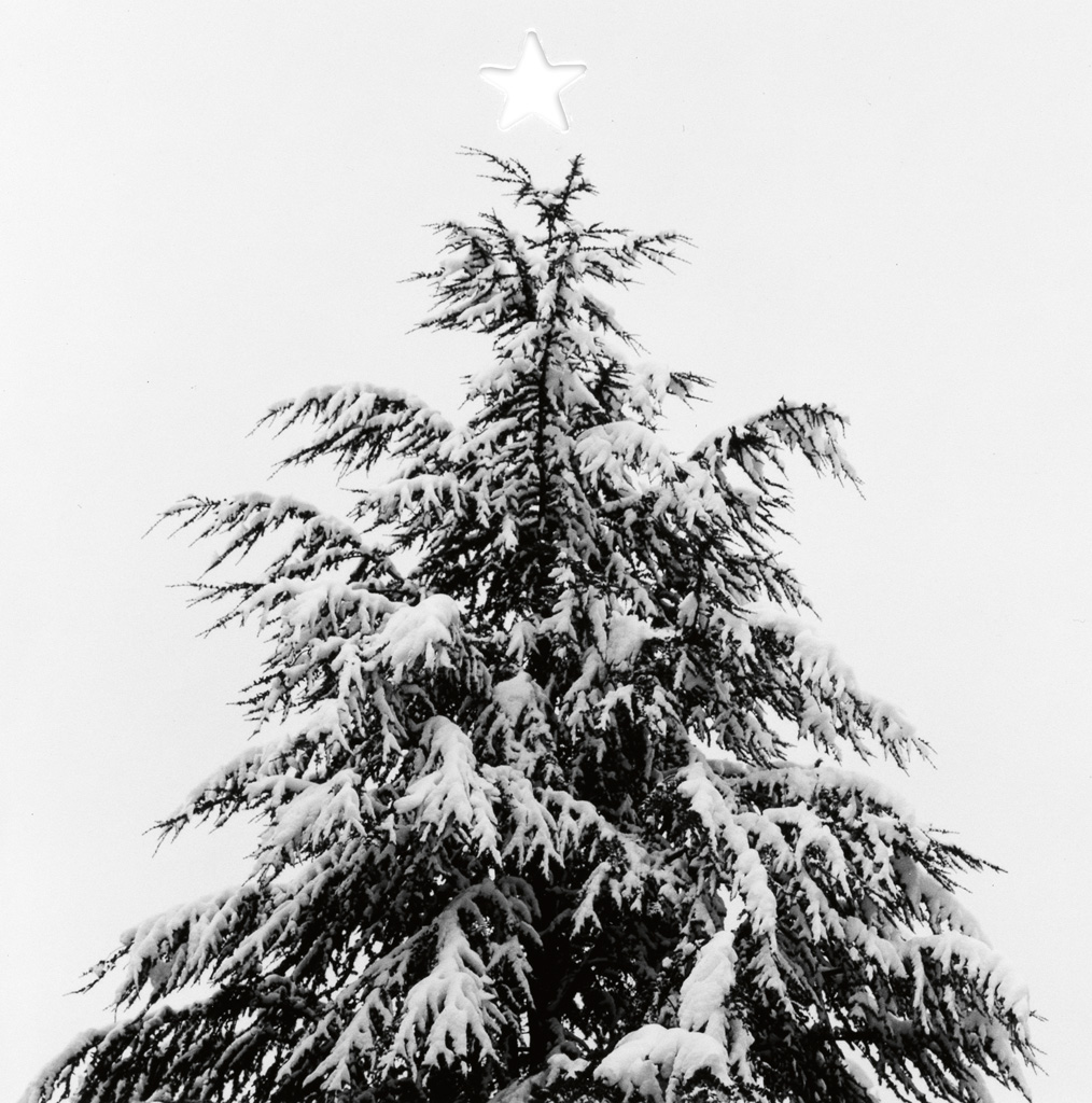 MAPPLETHORPE, ROBERT (1946-1989) Merry Christmas (snow-covered fir tree with die-cut star).