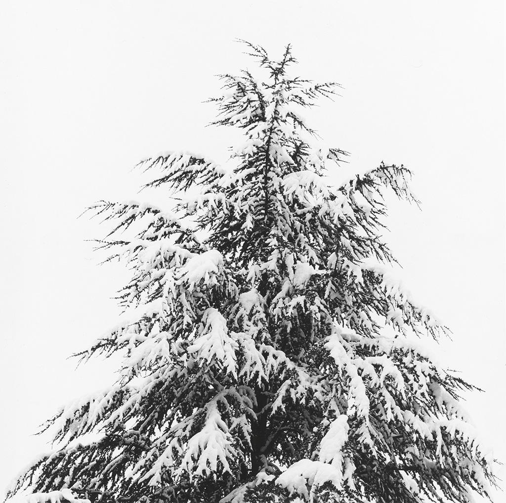 MAPPLETHORPE, ROBERT (1946-1989) Merry Christmas.