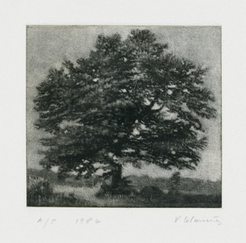 VIJA CELMINS Untitled (Tree).