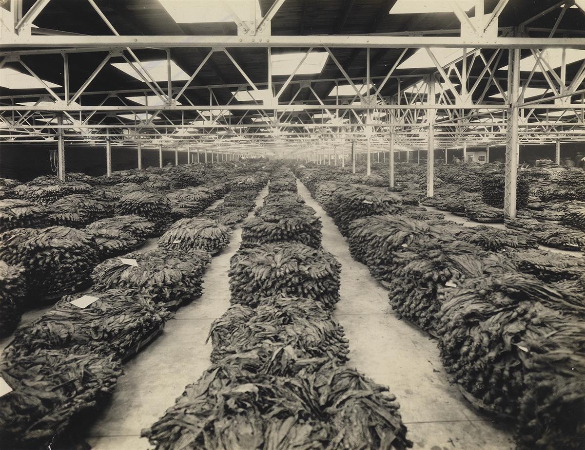 (BURLEY TOBACCO--LEXINGTON, KY) An extensive photographic archive containing 94 photographs relating to the Burley Tobacco industry in