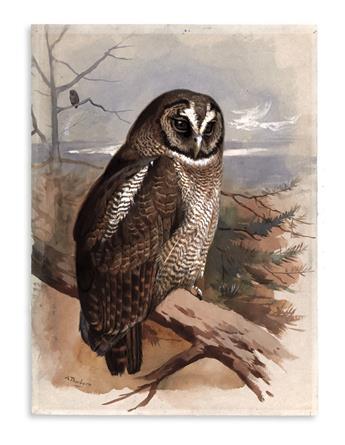 THORBURN-ARCHIBALD-[Brown-Wood-Owl]