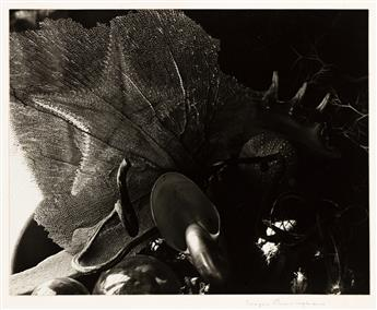 IMOGEN CUNNINGHAM (1883-1976) Shell Collection 3.