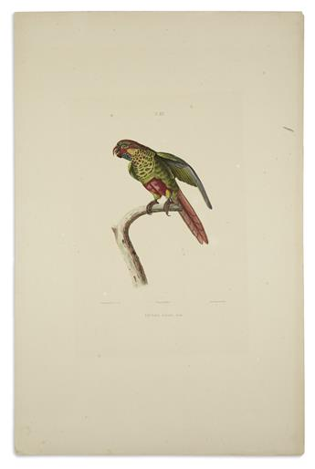 (BIRDS)-Blanchard-Emile-Group-of-3-hand-colored-lithographed