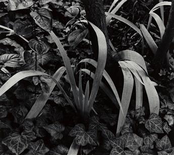 (PAUL STRAND) (1890-1976)/RICHARD BENSON (1943-2017) Portfolio Four.