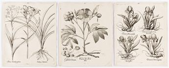 BESLER, BASILIUS. Group of 30 uncolored folio engravings from Hortus Eystettensis.