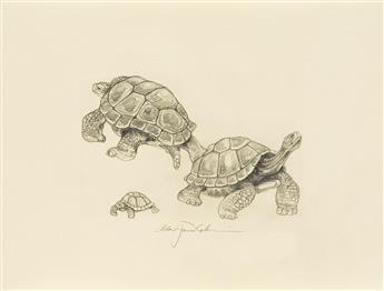 (CHELONIIDAE-PRESS)-Lawrence-D-H-Tortoises