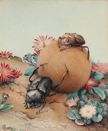 EDWARD J. DETMOLD. The Ball-Rolling Beetles.