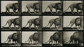 EADWEARD-MUYBRIDGE-(1830-1904)-A-selection-of-10-plates-from