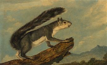 AUDUBON, JOHN WOODHOUSE (1812-1862). California Gray Squirrel.