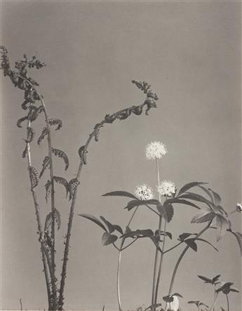 EDWIN HALE LINCOLN (1848-1938) A suite of 14 delicate botanical studies from Wild Flowers of New England.
