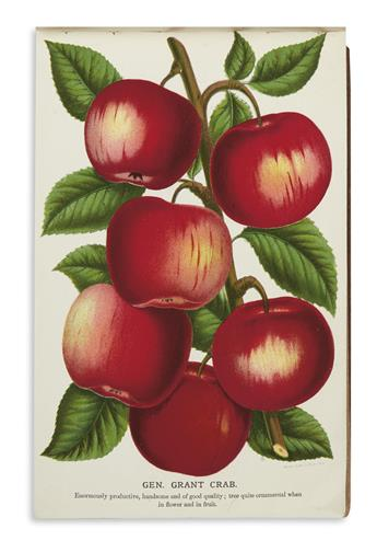 (FRUIT-AND-TREES)-Stecher-Lithography-May-Brothers-Nurseryme
